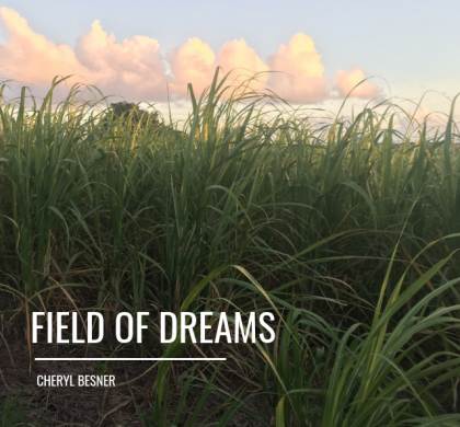 Field Of Dreams!